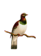 Northland Golf Club